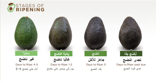 how_to_pick___buy_hass_avocados___hass_avocado-2